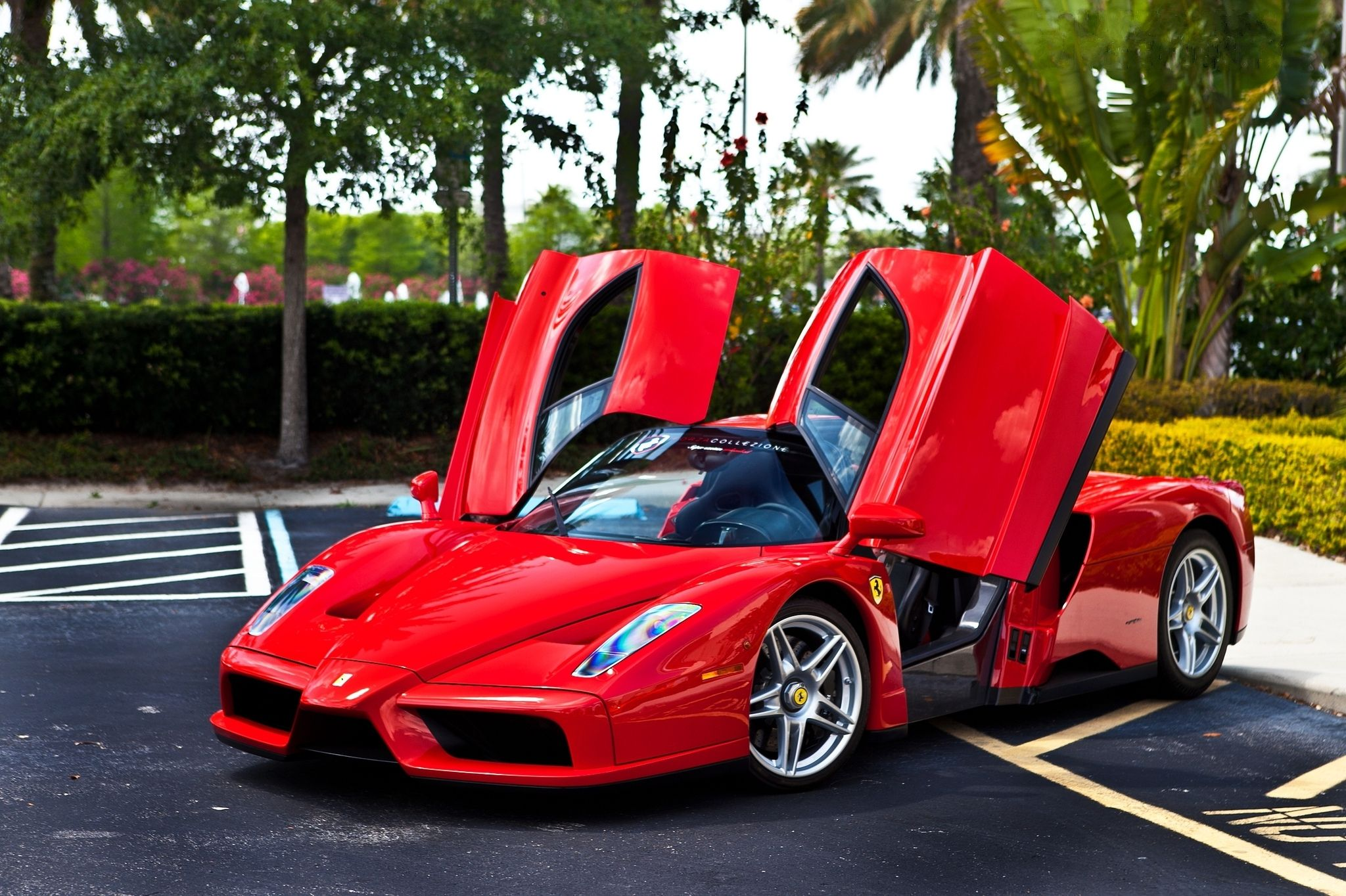 Ferrari Enzo Wallpapers